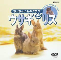 ウサギとリス