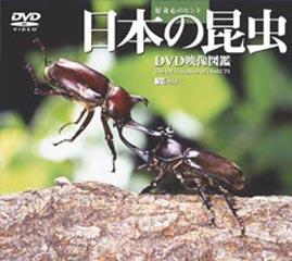 日本の昆虫