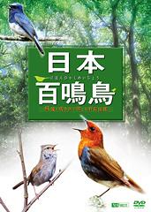 日本百鳴鳥