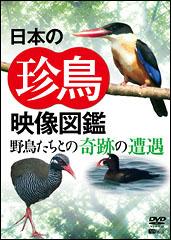日本の珍鳥 映像図鑑