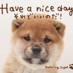 Have a nice day~それでいいのだ